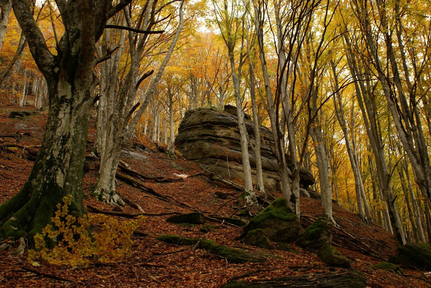11 patrimoni UNESCO dell'Emilia Romagna faggete vetuste parco foreste casentinesi - sasso fratino