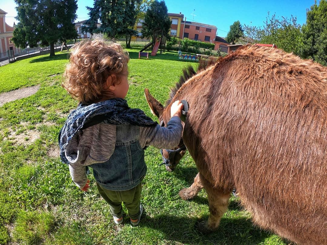 Bambino e asino Ph. Asinomondo, il mondo degli Asini di Reggio Emilia