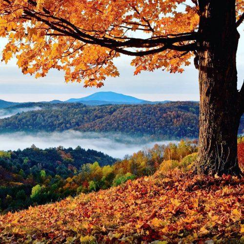 Fall Foliage #InEmiliaRomagna foreste casentinesi ph. followselect