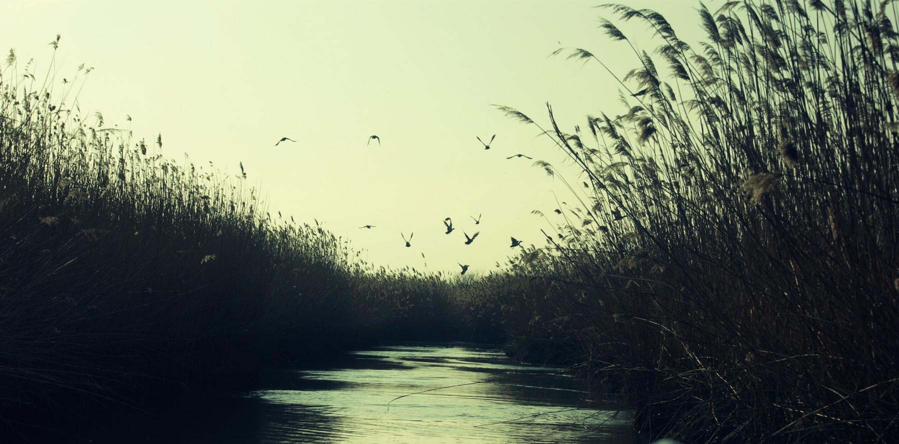 oasi2web