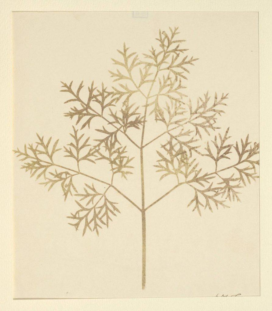William Henry Fox Talbot, Leaf of a plant, 1839-1844, Modena, Biblioteca Estense Universitaria