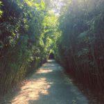Labirinto della Masone, Fontanellato | Ph. @sarapannys via Instagram