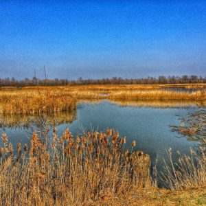 Parco del Delta del Po - Foto di @simonegraziosi
