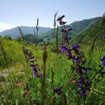 Parco dei laghi di Suviana e Brasimone | Ph. Roberto Schieppati WLE2019