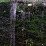 Abeti vicino al Lago Santo, Valli del Cedra e del Parma | Ph. Ghelli91 WLE2019