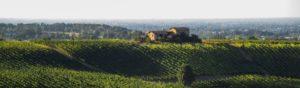 Vino al Vino – Sagre e feste dell'Emilia Romagna