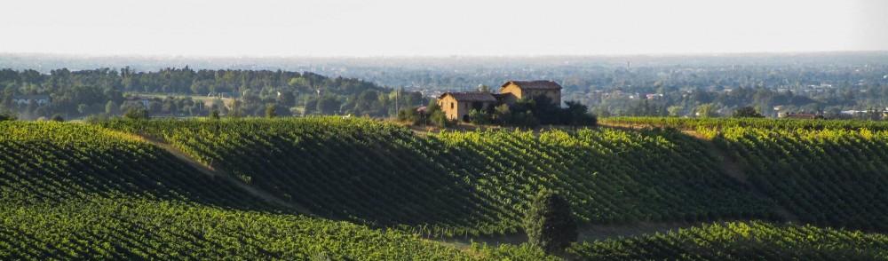 Grape and wine Festivals in Emilia Romagna