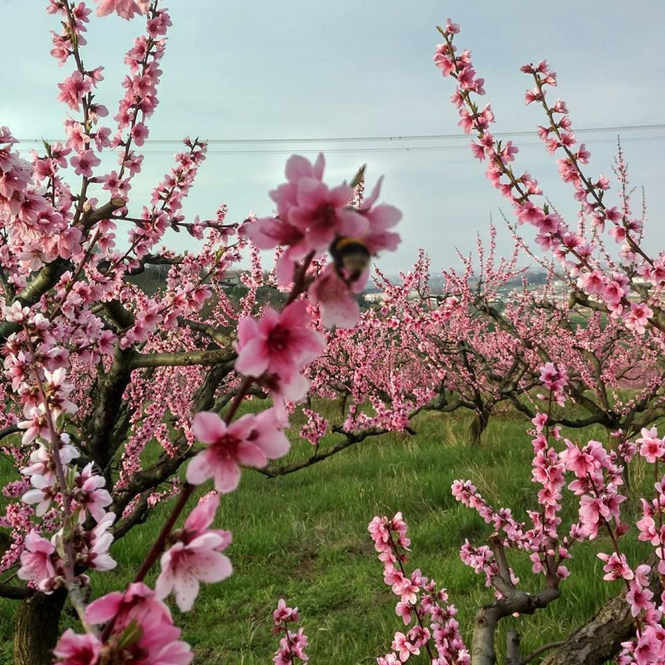 Cosa fare in primavera in Romagna