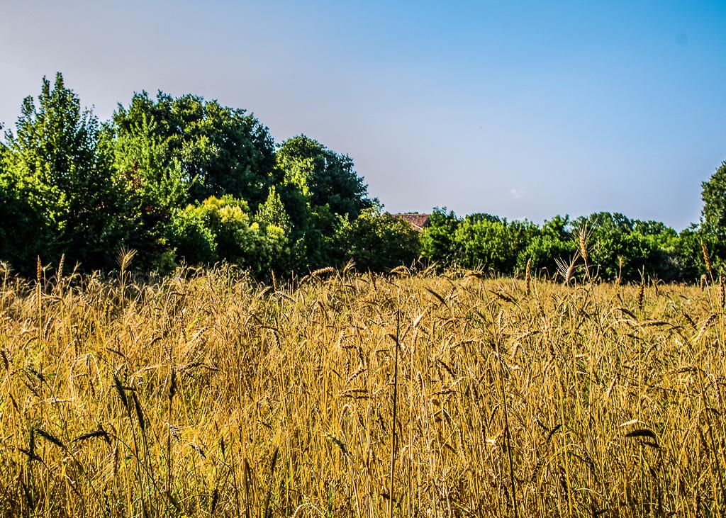 [ParlamiditER] Interno Verde, per scoprire i giardini segreti di Ferrara
