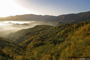 The Casentinesi forests, Monte Falterona and Campigna National Park