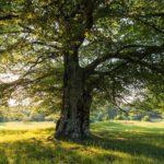 Beech tree at Boschi di Carrega | Ph Sara Soliani, parchidelducato