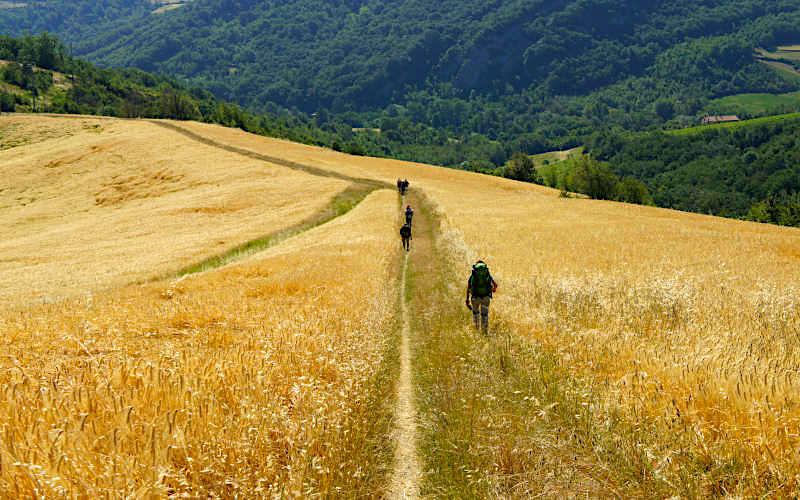 Cammino di Sant'Antonio (tratto Bologna-Settefonti-Tossignano) | Foto dal sito MagicoAlvis.it