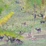 Deer at Monte Sole Park | Ph lpvva1 via Flickr