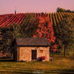 Fall Foliage, Vigneti a Castelvetro di Modena | ph. Luca Nacchio