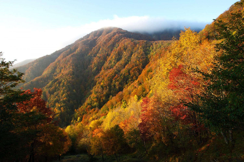 Fall Foliage in Emilia-Romagna