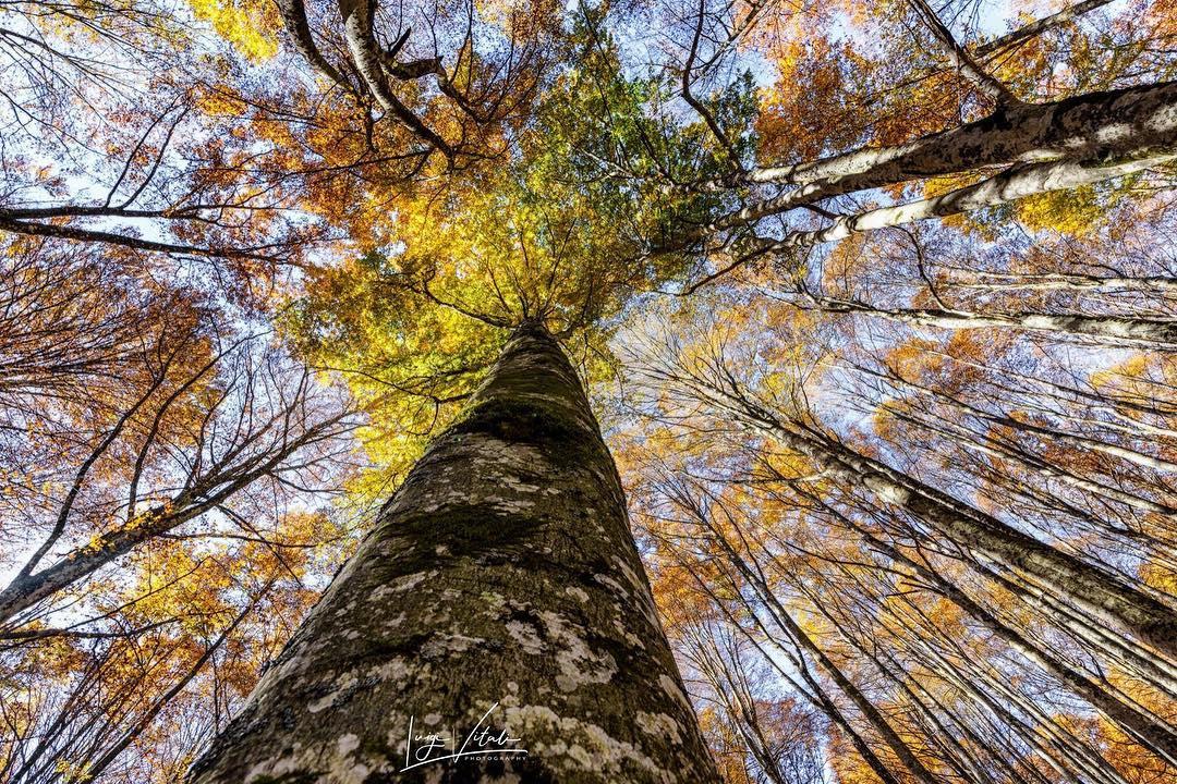 Fall Foliage #InEmiliaRomagna arco delle foreste casentinesi ph. @luigi_vitali_photo