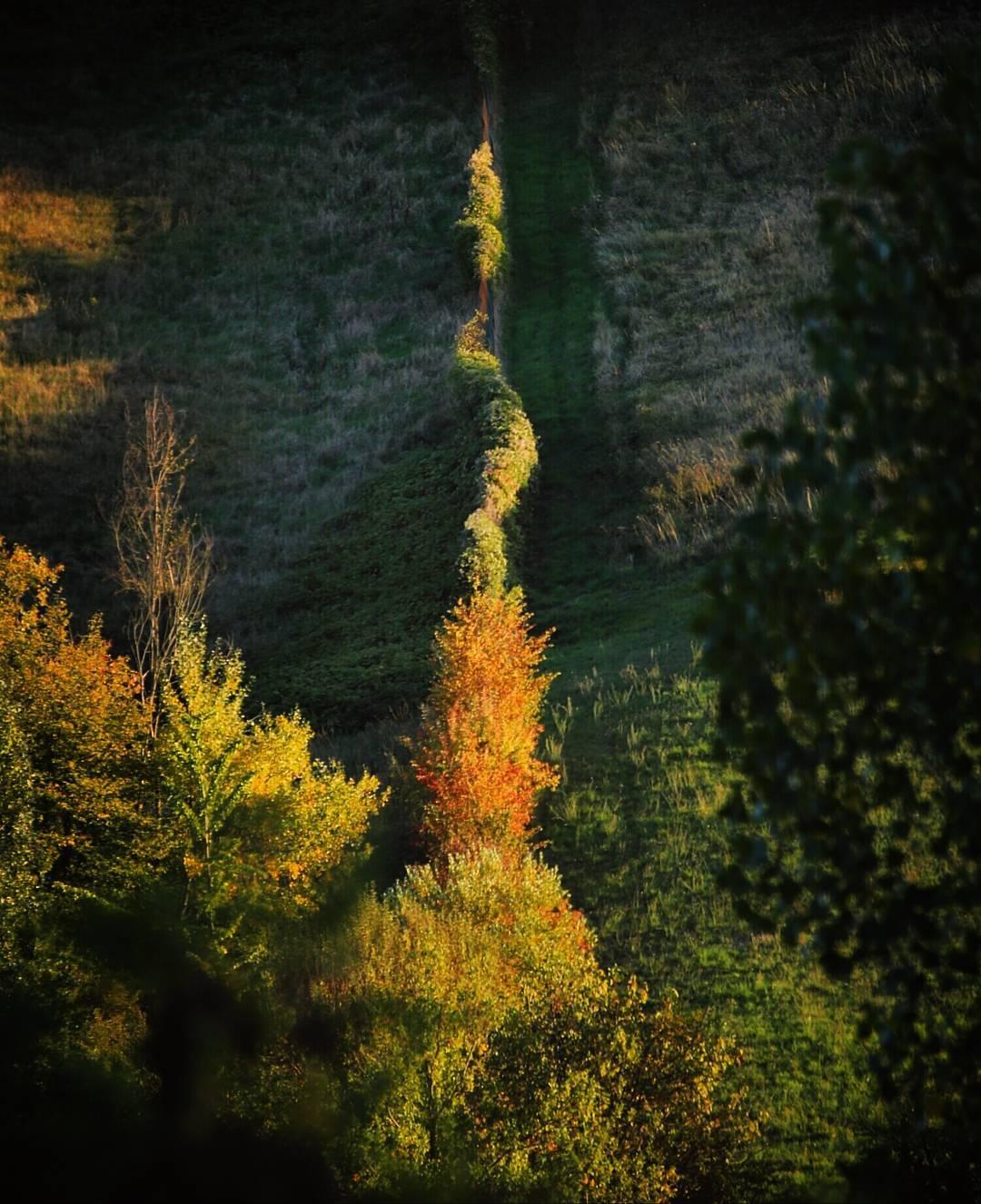 Fall Foliage #InEmiliaRomagna colli bolognesi ph. ilaria.dicocco