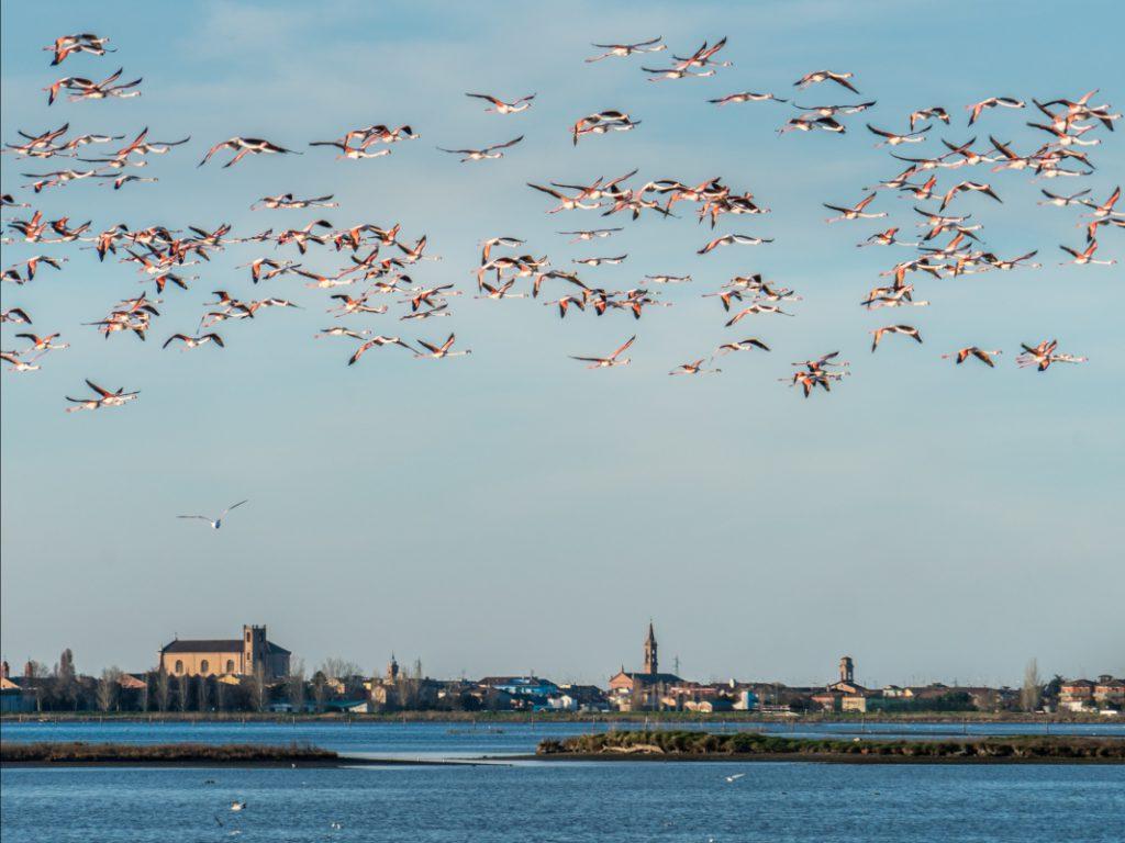 Flamingos – Ph. Vanni Lazzari