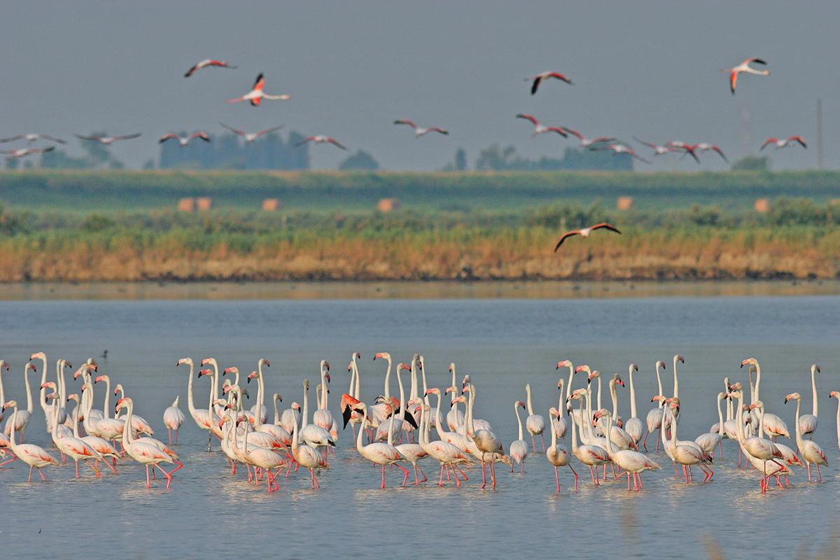 Flamingos at the Boscoforte Peninsula | Photo © Flavio Bianchedi
