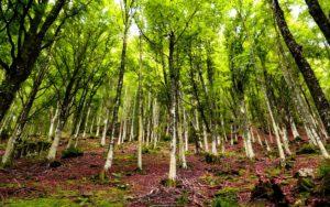 Parchi naturali e Terme: weekend di benessere naturale