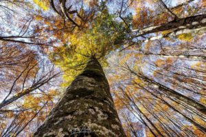 5 hikes to discover the Casentinesi Forests on foot