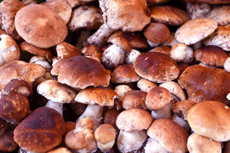 Emilia-Romagna Food Insights | The Borgotaro Porcini Mushrooms