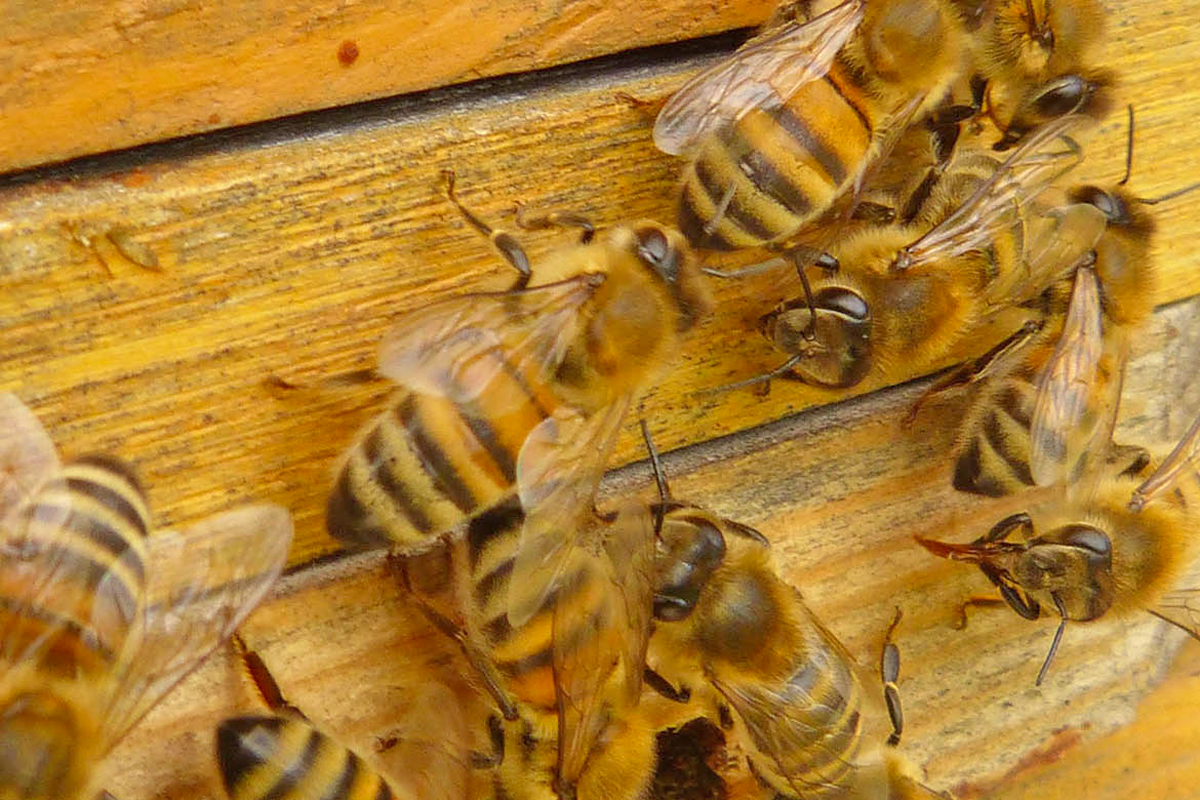 National Institute of Apiculture | Bologna