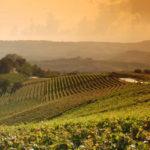 Terre di Lambrusco, ph. Consorzio Tutela Lambrusco di Modena