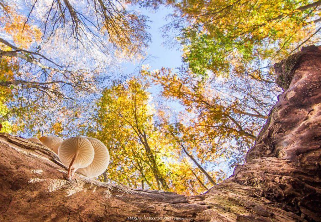 Foliage Monte Fumaiolo (FC) Ph. marino_ale80