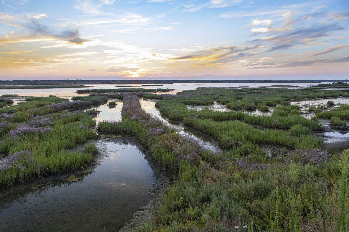 Along the Lamone River | Baiona brackish lagoon (Ravenna)