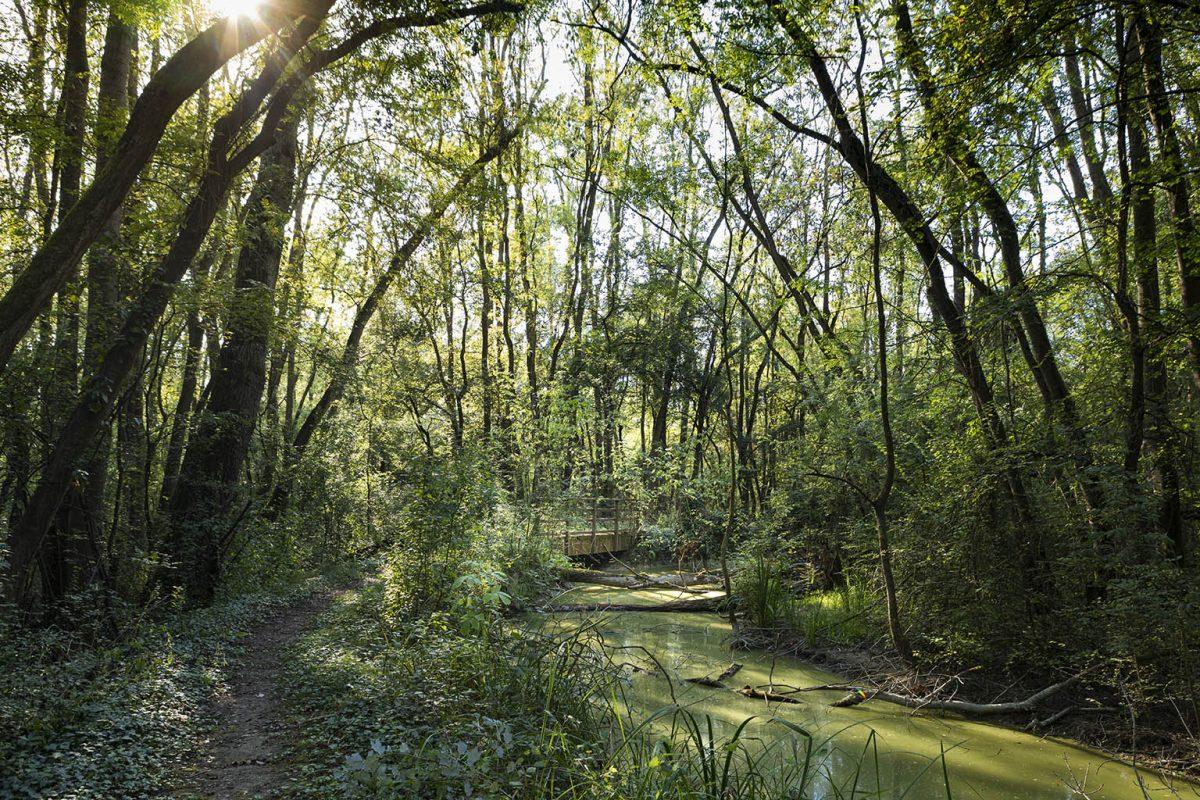 Along the Lamone River | Punte Alberete oasis (Ravenna)