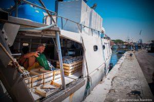 Fish Markets of the Romagna coast