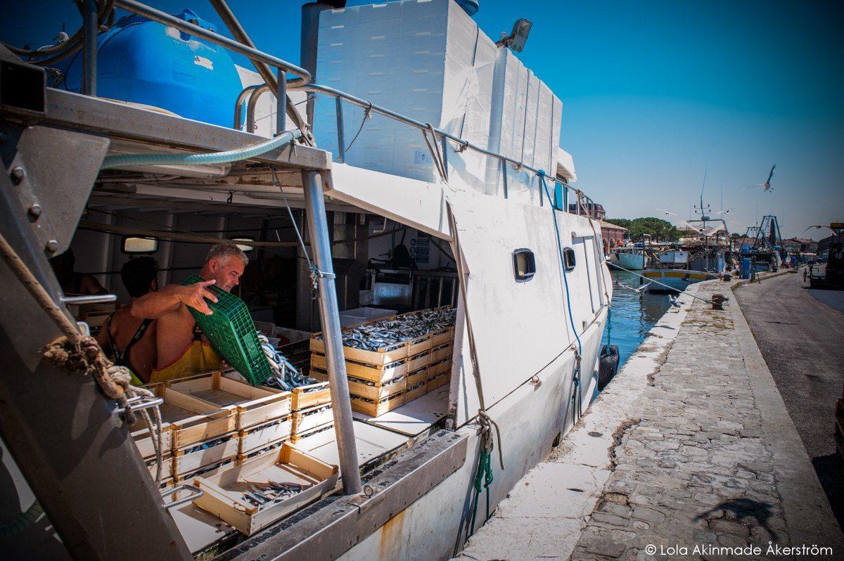 Lupi di mare: i mercati del pesce della Costa Romagnola