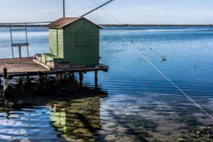 Meraviglie della natura: 5 luoghi di Ravenna da visitare