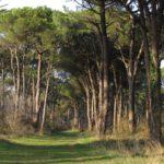 Ravenna, Classe Pine Forest Ph. myravenna