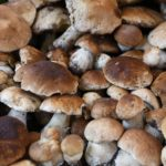 Porcini Ph. Fiera del Fungo di Borgotaro