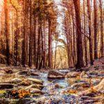 Premilcuore, Foreste Casentinesi Park | Ph. francesco_1978