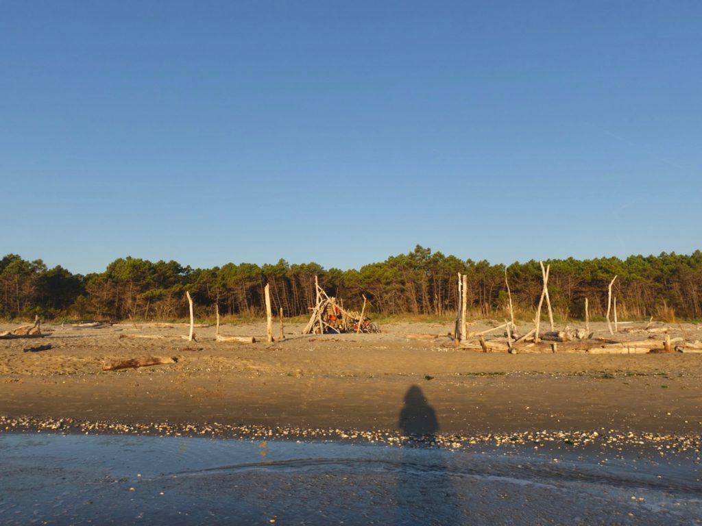 Ravenna, Lido di Classe – pineta vista dal mare , ph. Melanie Chiselotti – sentieriliberi.com