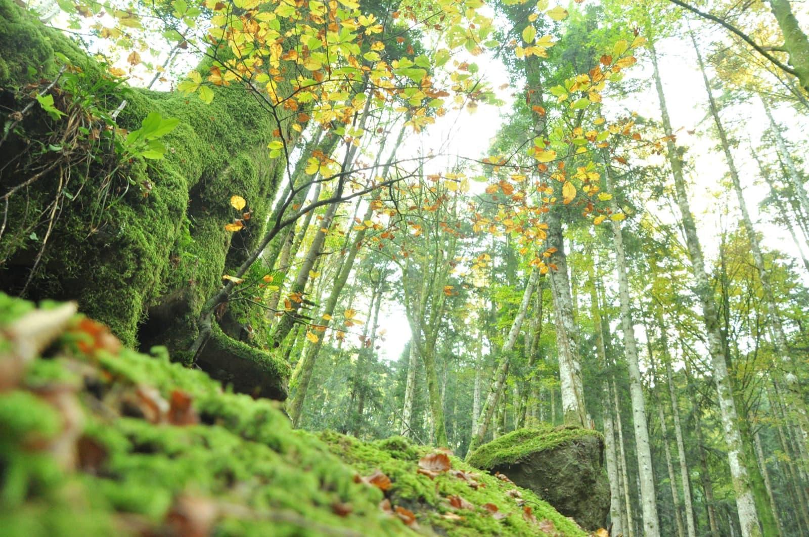 Sasso Fratino, foliage