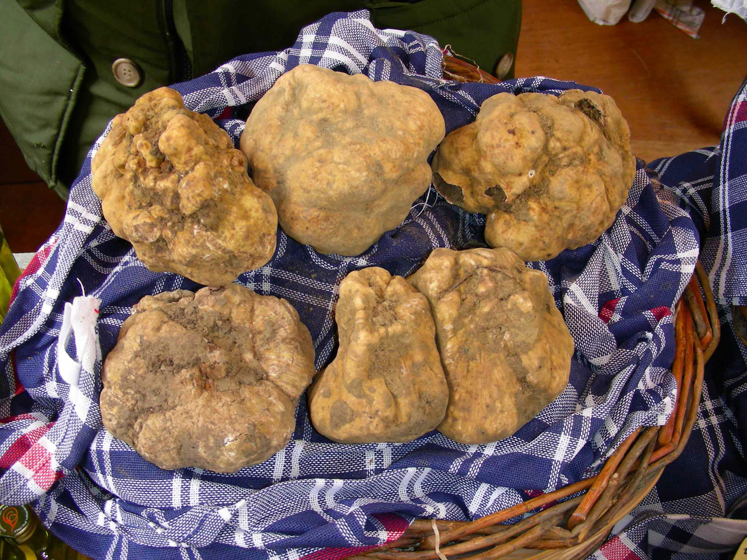 Truffles Italy Guide