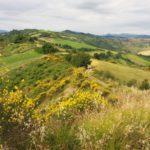 Tra San Martino in Pedriolo e Borgo Tossignano – Ph. Associazione Cammino Sant'Antonio