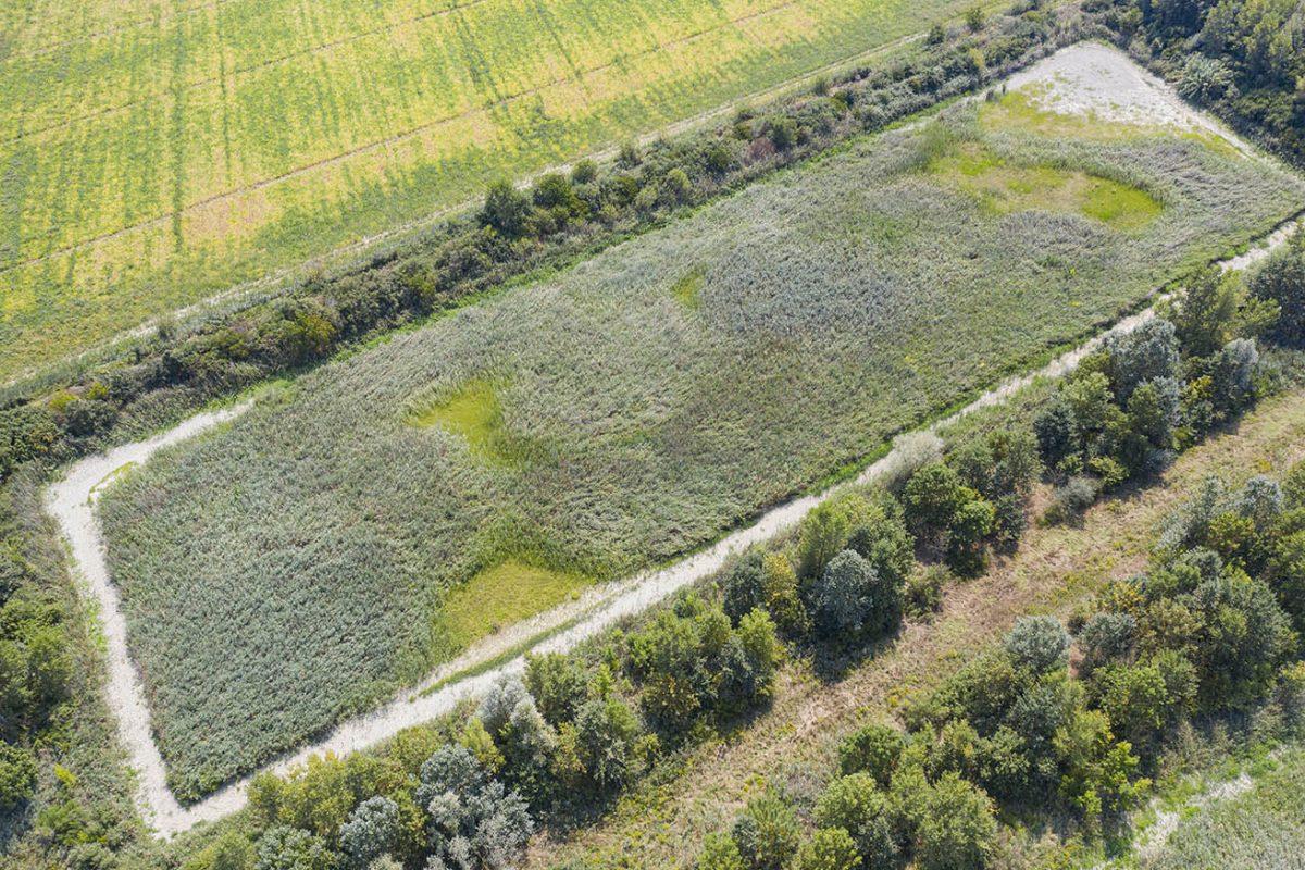 Along the Lamone River | Former sugar factory's basins