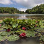 Appennino Tosco Emiliano National Park, Calamone Lake | Ph. Carlo Alberto Conti, WLE2019