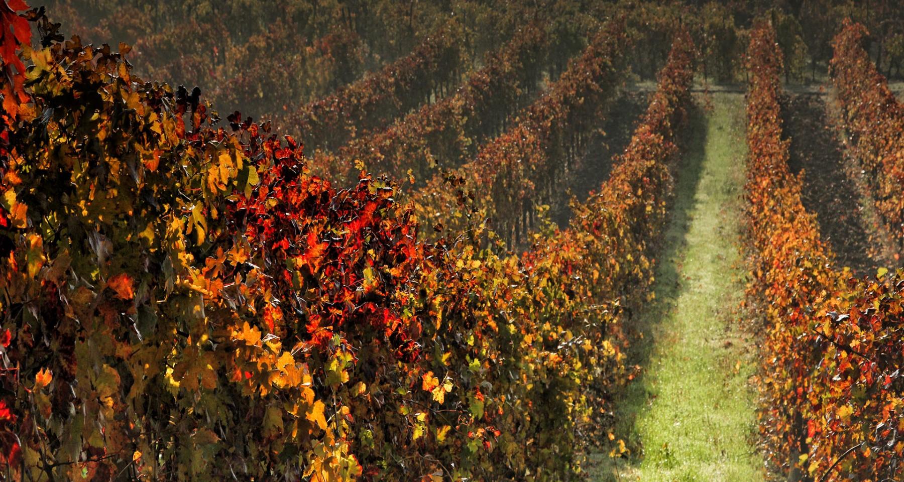 Emilia-Romagna terra dei buoni vini – Gli Eventi 2017 dedicati