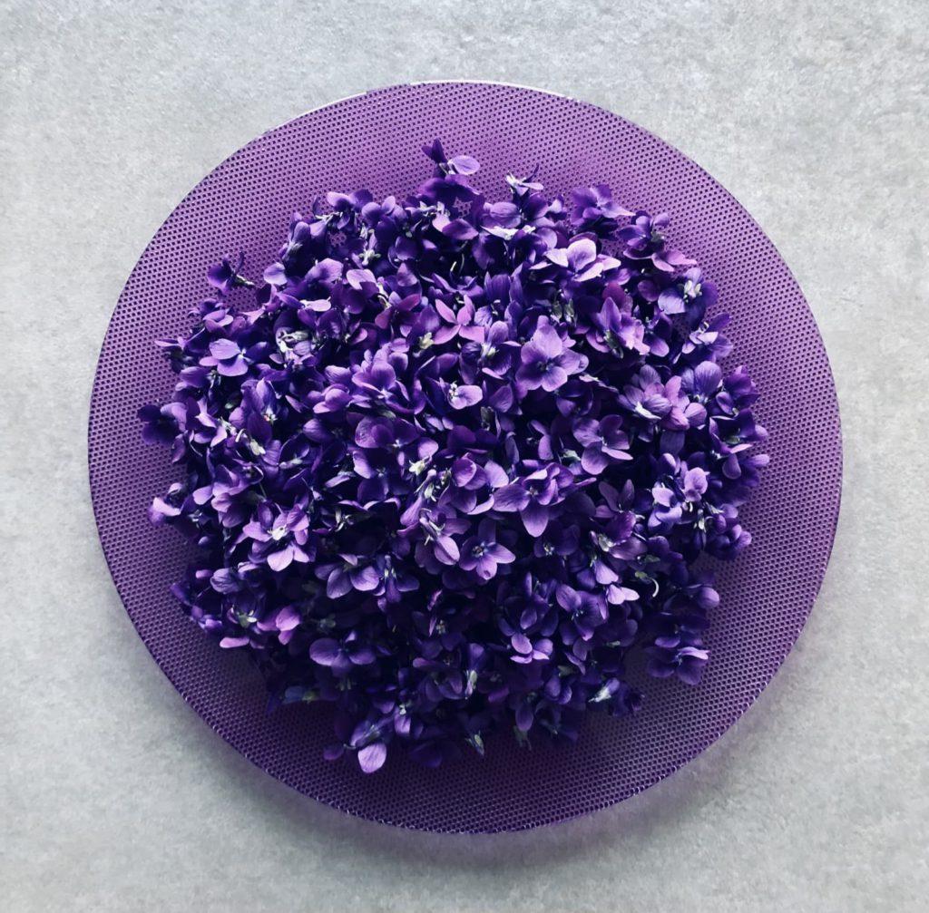 Violetta | Ph. FedeCortezzi