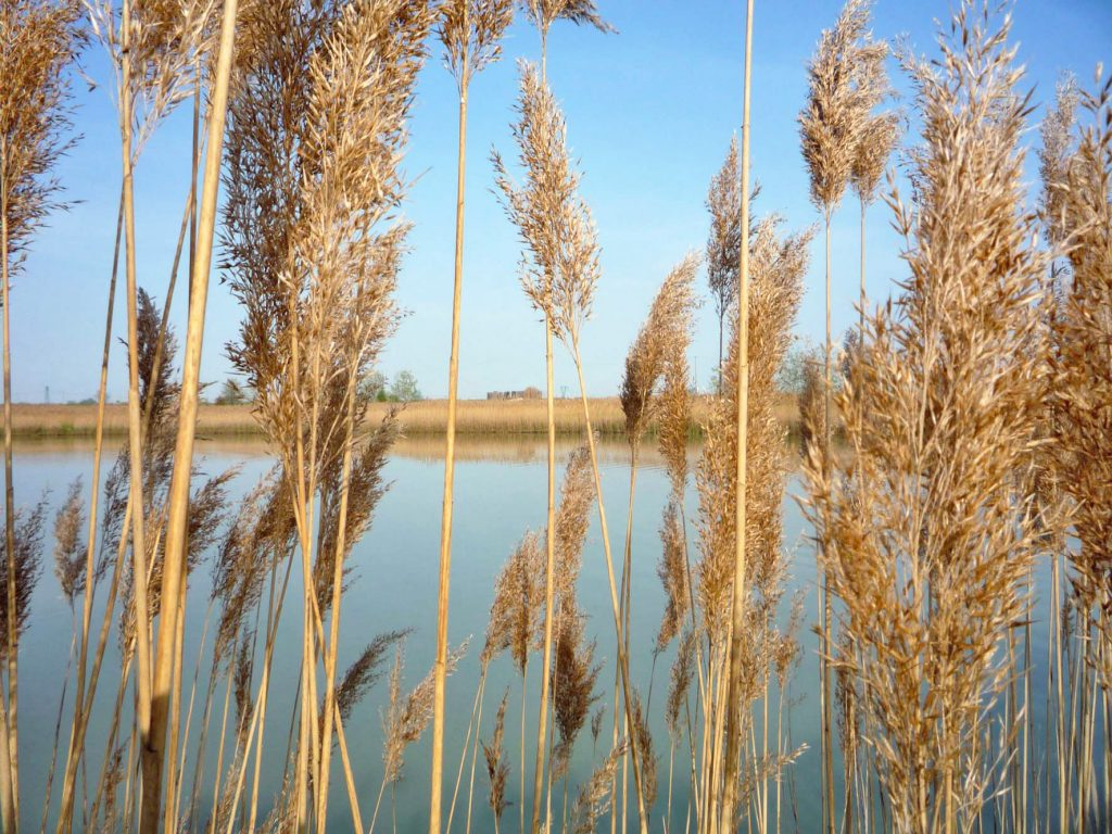 Bassa Romagna: in the Land of Good Life