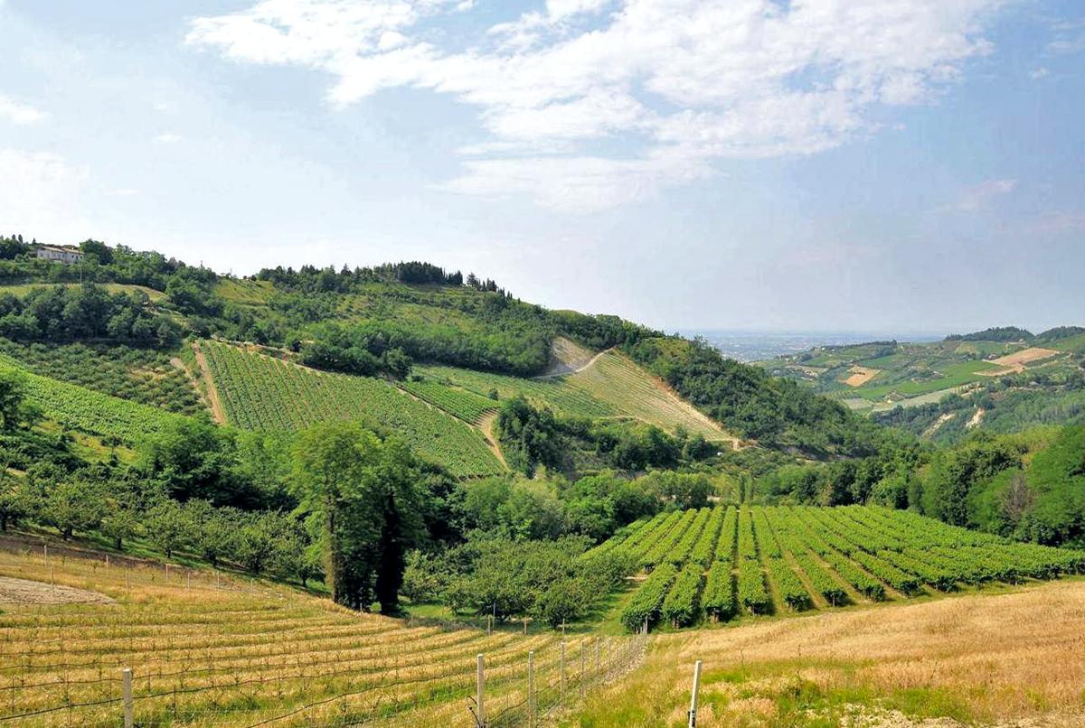 Le colline di Cesena   Foto Regione Emilia Romagna