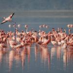 Fenicotteri rosa nel Parco del Delta del Po Ph. PrimaveraSlow