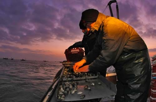 Pescatori vongole a Goro Ph. Ferrarainfo.com