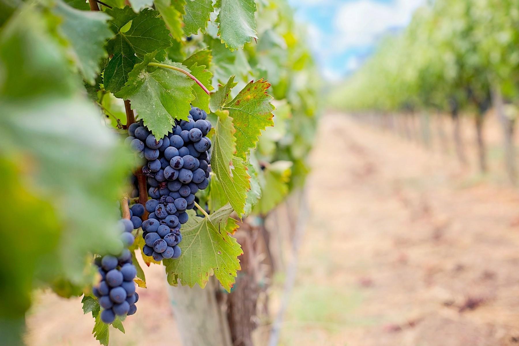Wine routes in Emilia Romagna